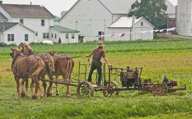 Amish Horse Drawn Plow