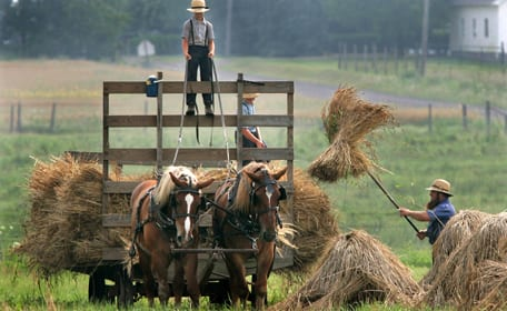 Amish Man Working