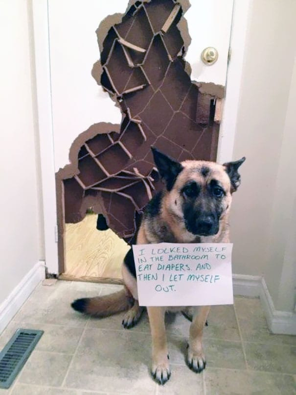 These Pet Shaming Signs Are The Revenge Owners Needed