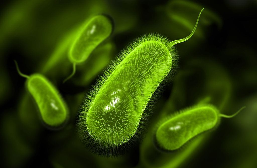 Geobacter