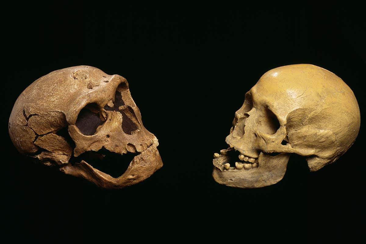 A Neanderthal's skul (left) versus the skull of a modern human (right)